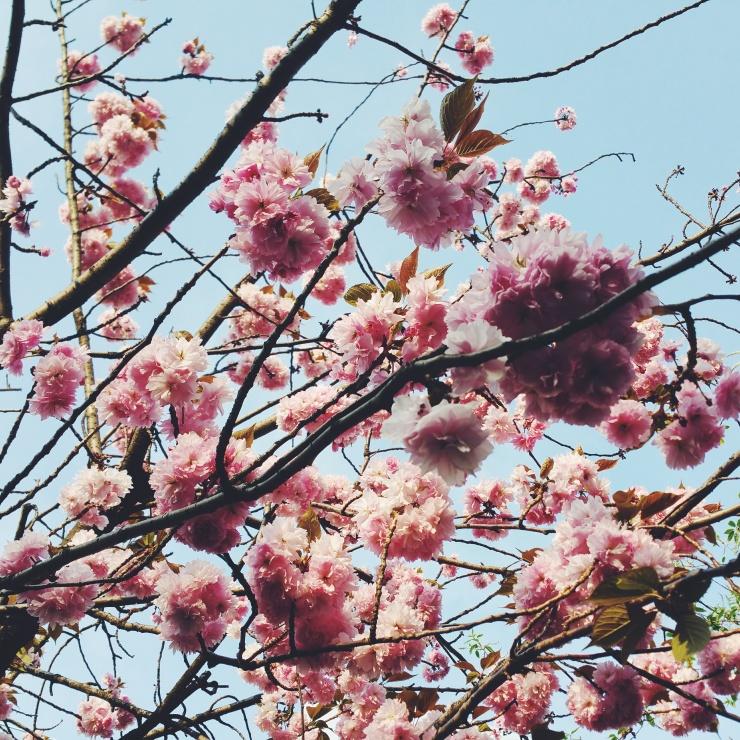 risotti & dintorni primavera fiori rosa