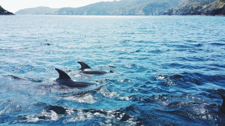 risotti e dintorni, new zealand, nuova zelanda, bay of islands, dolphins, delfini
