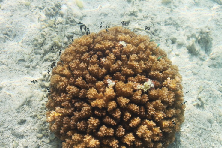 risotti e dintorni, isole cook, cook islands, honeymoon, luna di miele, aitutaki, rarotonga, pesci, barriera corallina, polinesia