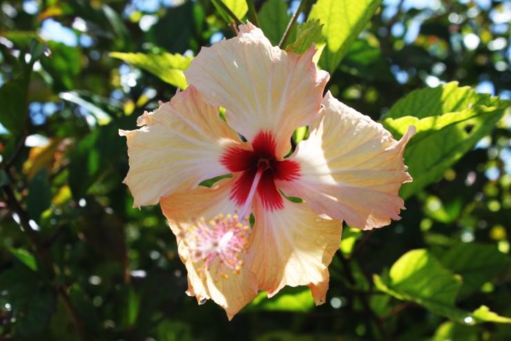 risotti e dintorni, isole cook, cook islands, luna di miele, honeymoon, flowers